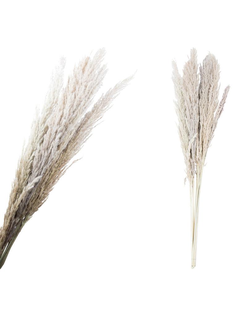 Damn Fluffy grass dried 111 cm stuks