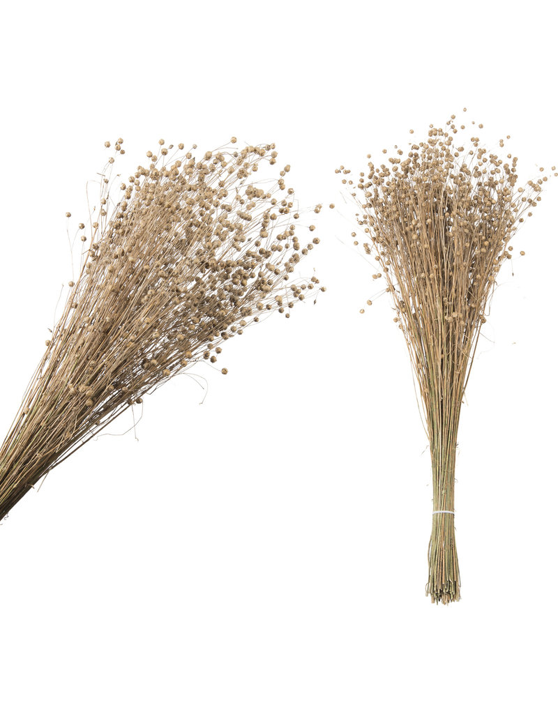 Damn Fluffy grass dried 63 cm ( bosje)