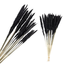 Damn Pampas gras zwart ( bosje)