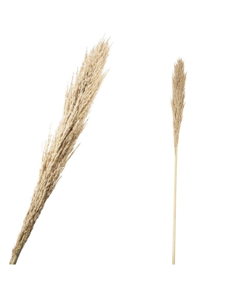 Damn Fluffy grass dried 140cm ( 1 stuk)