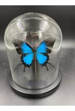Damn Stolp with butterflies - Copy - Copy - Copy - Copy - Copy - Copy - Copy - Copy - Copy