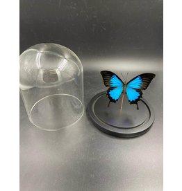 Damn Stolp met echte vlinders 1 stuks