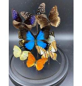 Damn Stolp met echte vlinders 9 vlinders