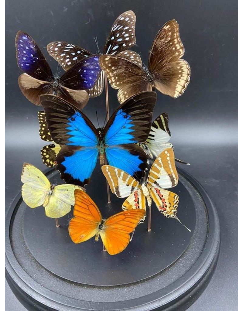 Damn Stolp with butterflies - Copy - Copy - Copy - Copy - Copy - Copy - Copy - Copy - Copy - Copy - Copy