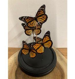 Damn Stolp met echte vlinders 4 stuks