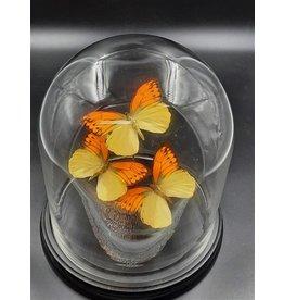 Damn Stolp met echte vlinders 3 stuks