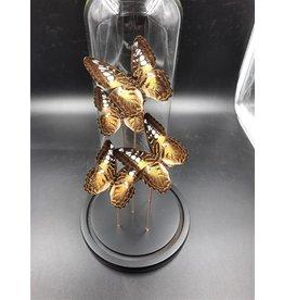 Damn Stolp met echte vlinders 5 stuks