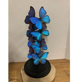 Damn Stolp met echte vlinders ( 8 stuks)