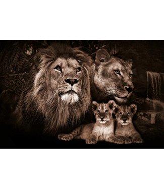 Ter Halle De Leeuwen Familie