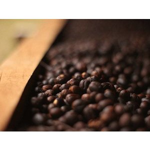 Dutch Barista Coffee Elixir - Santa Felisa Guatemala