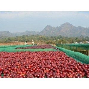 Dutch Barista Coffee Pin Laung Shan Red Honey - Myanmar
