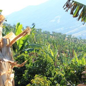 Dutch Barista Coffee Alta Vista natural- Brazil