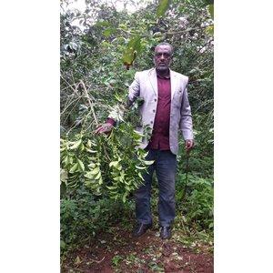 Dutch Barista Coffee Ethiopia - Temam Aba Mecha