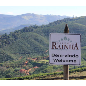 Dutch Barista Coffee Brazil - Fazenda Rainha