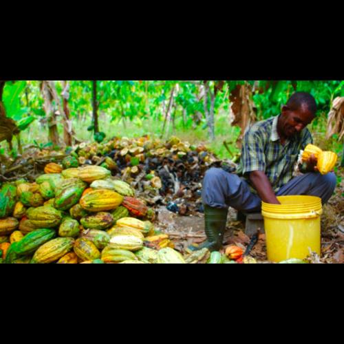 Tanzania - Kokoa Kamili 78%