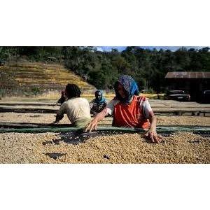 Dutch Barista Coffee Ethiopia - Aricha