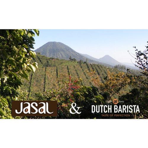 Dutch Barista Coffee El Salvador - El Capulin