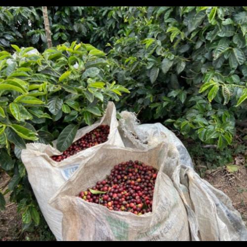 Dutch Barista Coffee Costa Rica - San Francisco