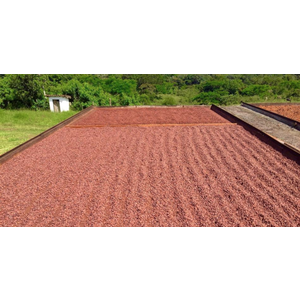 Brazil -Fazenda Camboa 63%