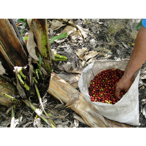 Dutch Barista Coffee Colombia - Finca La Amapolita