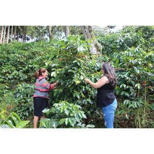 Dutch Barista Coffee Honduras - Las Delicias