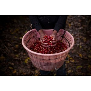 Dutch Barista Coffee Costa Rica - Hacienda Sonora