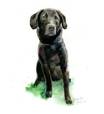 Hond  schilderij in opdracht