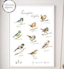 Europese vogels poster