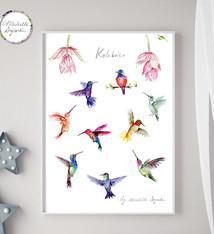Kolibrie poster