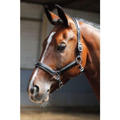 Harry's Horse Halster leder, zwart met bies