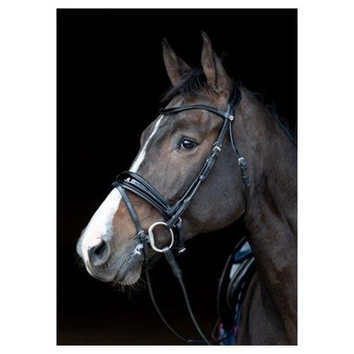 Harry's Horse Hoofdstel Vichy