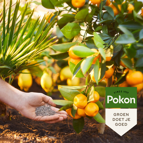 Pokon Pokon Mediterrane Planten Mest 1kg