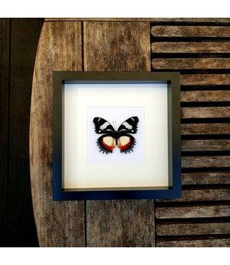 Dexithea in frame (25x25)