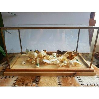 Display met echte dierenschedels, vlinders en kevertjes
