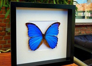 Butterfly in frame