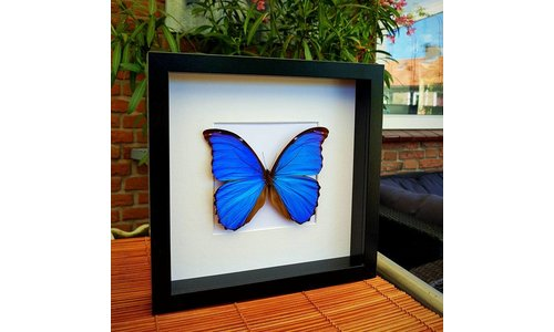 Butterfly in frame