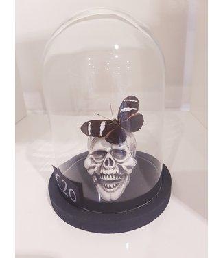 Vlinder met schedel in mini stolp