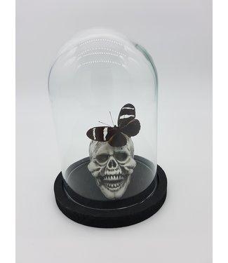 Heliconius met schedel in mini stolp