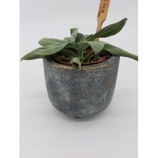 Little flowerpot