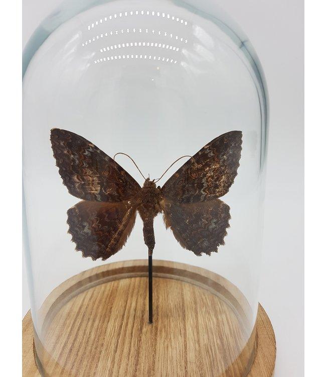 Vlinder in stolp (17X13)