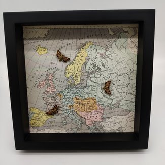 3 moths with print in frame (25x25)