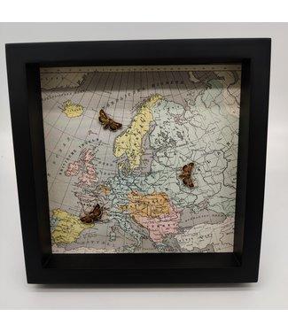 Three moths in frame (25x25)