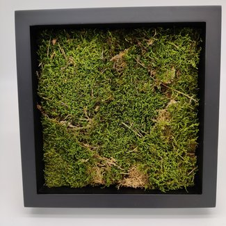 """Moss in frame (10""""x10"""")"""