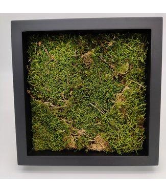 Moss in frame