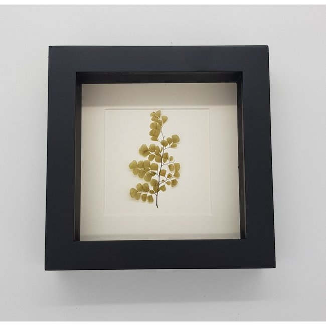 Dried plant in frame (16x16)