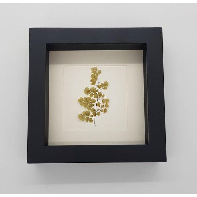 Gedroogd plantje in lijst (16x16)