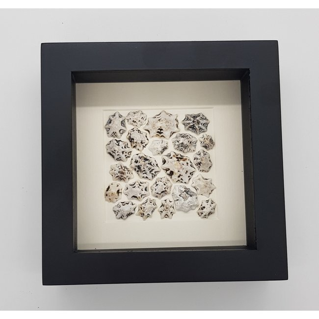 Shells in frame (16x16)