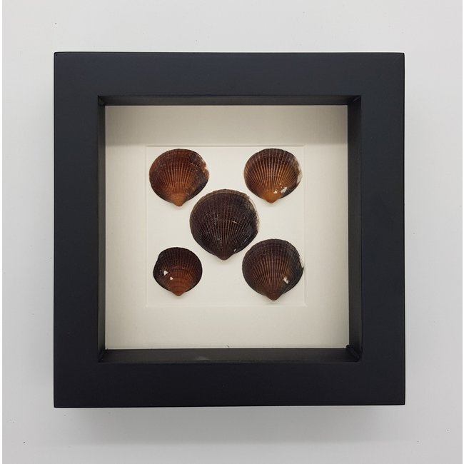 Shells in frame (16x16)