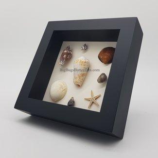 "Shells framed (6.3"" X 6.3"")"