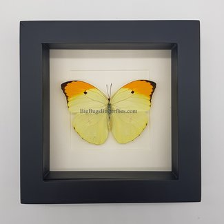 Vlinder in lijst (16X16)